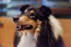 kutyusok_10kutyik