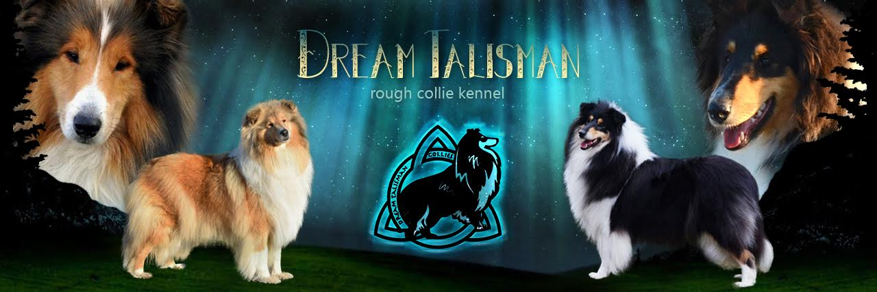 Dream Talisman Collie Kennel Főoldal
