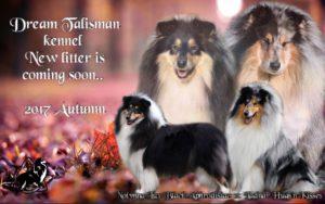 Dream Talisman kennel Second litter