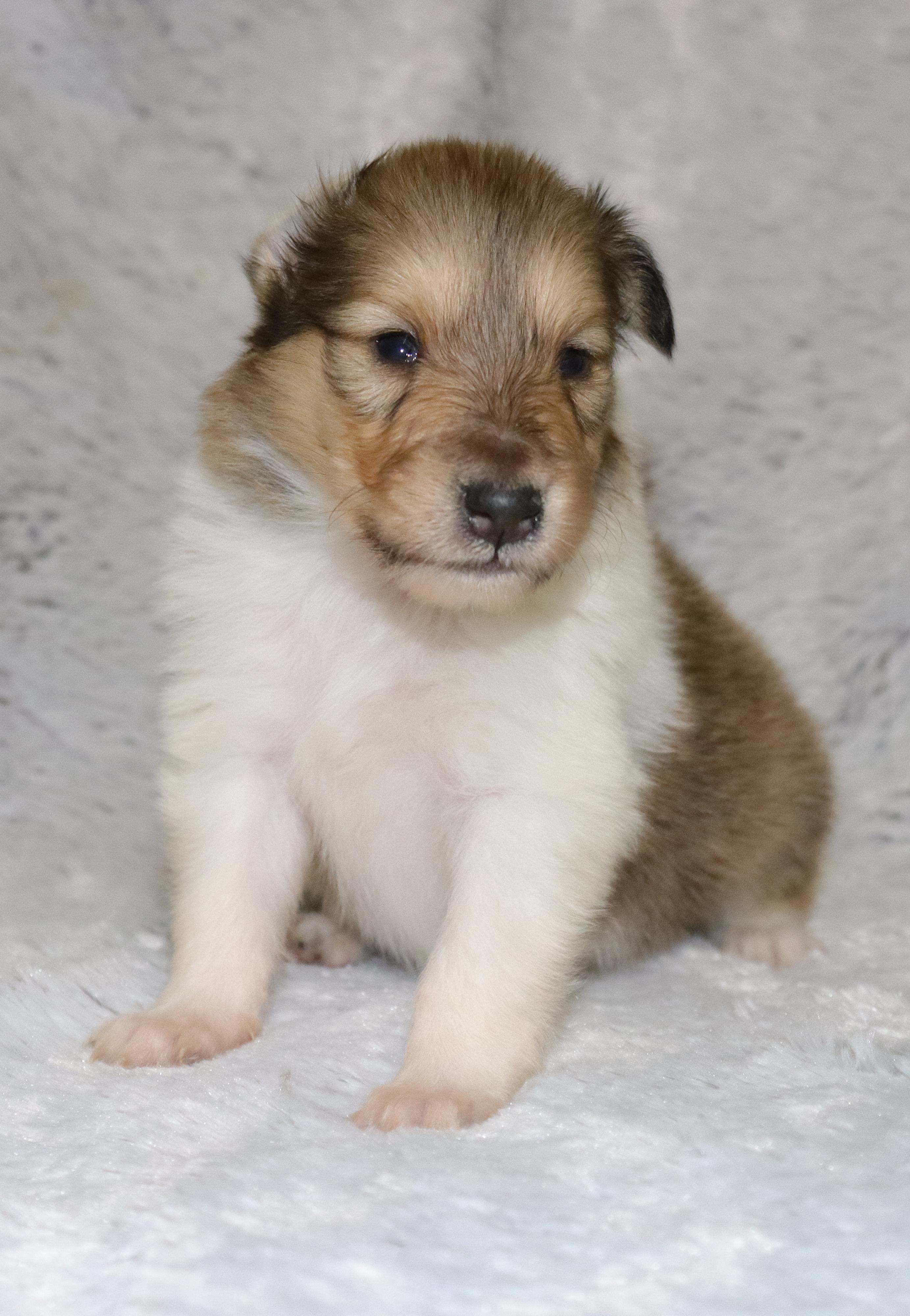 Dream Talisman vendég baba kutya