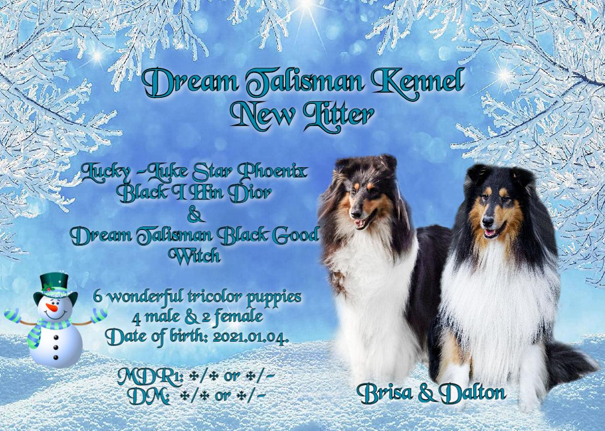 Dream Talisman Collies